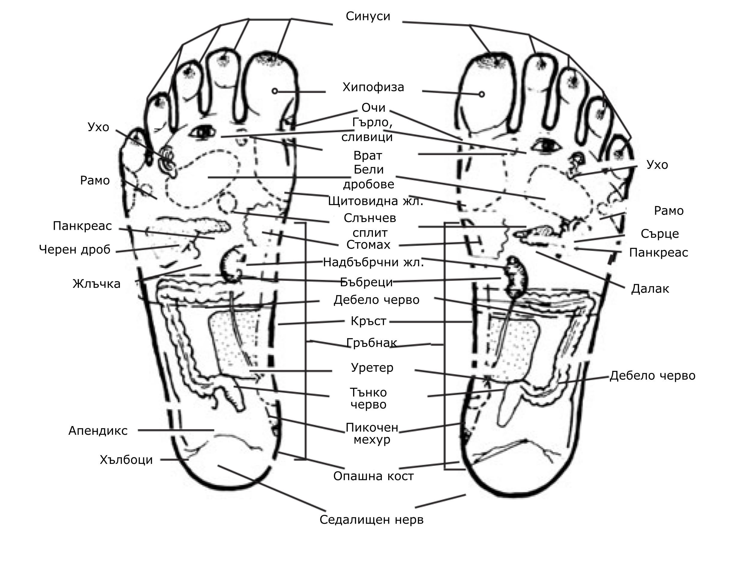 Рефлекторни зони на стъпалата