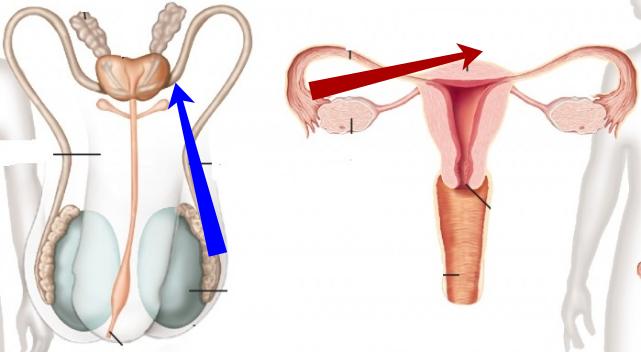 Даоски методи за превръщане на сексуалната енергия в жизнена, част 3 11